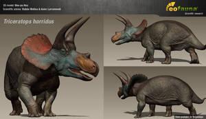 Triceratops in the flesh (work in progress)