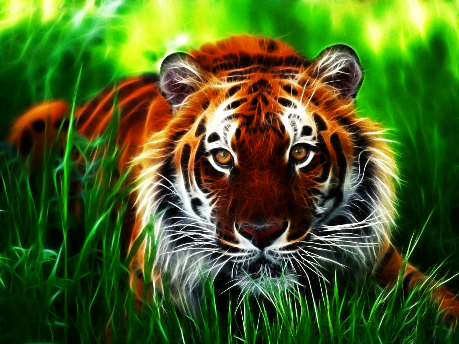 national geographics tiger wallpaper