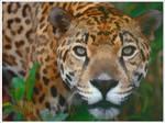 Painted Jaguar Wallpaper