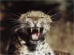 Painted Leopard Wallpaper