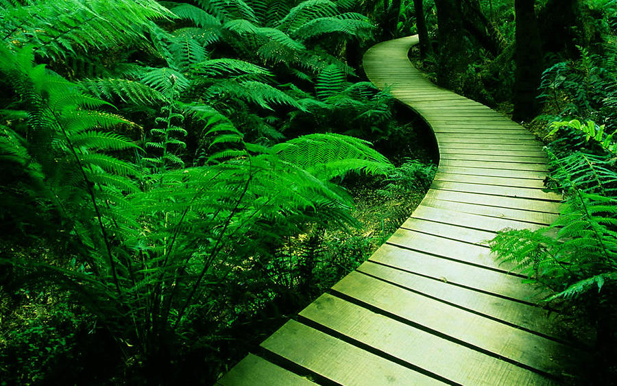 green path into the - photo #4