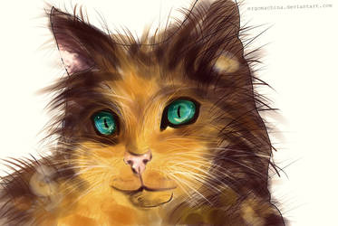 Jian-Guo the cat by ErgoMachina
