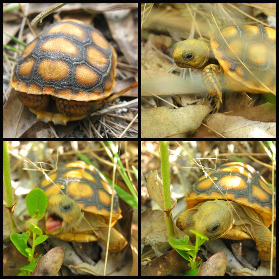 little turtle by RorieB
