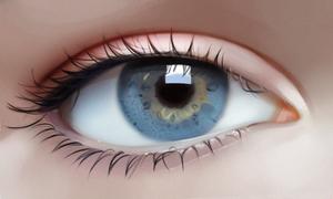 Eye anatomy study