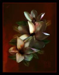 Magnolias by Brashier