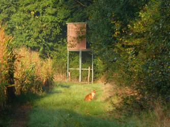 foxy morning by Linebine