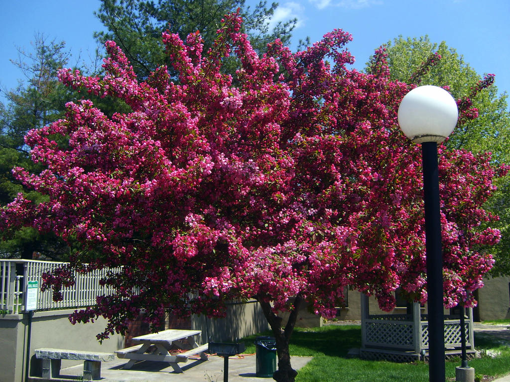 Flowering tree in red by furryknight on deviantart for Tree with red flowers