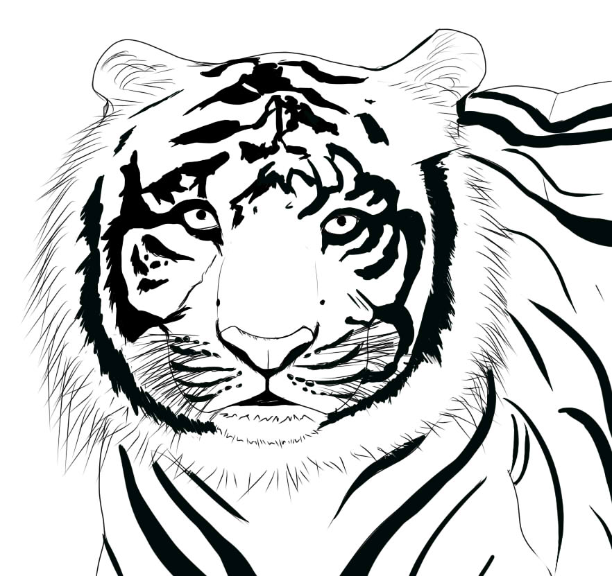Line Drawing Of Tiger Face : Ripped face coloring pages