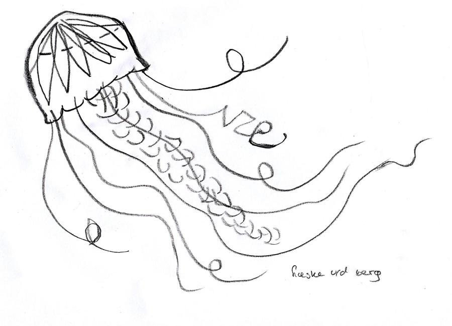 100 Moon Jellyfish The Ebestiary Moon Jellyfish The Ebestiary