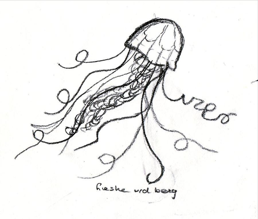 Jellyfish Tattoo Sketch Jellyfish Sketch 2