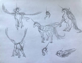 Alicorn Anatomy Practice by rainbowastraea