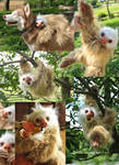 Realistic Two Toed Sloth