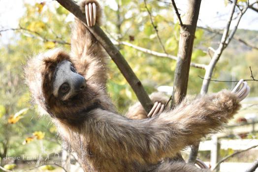 German Sloth