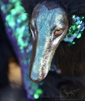 Glimmer close-up