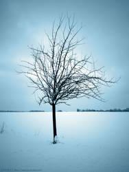 Lone Standing Tree by serel