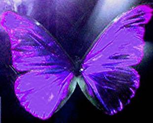 Purple Butterfly by Forbidden-dreams