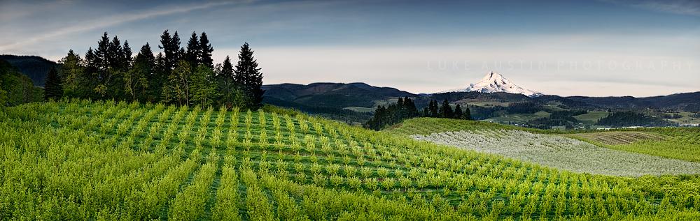 Mt Hood: Oregon by LukeAustin