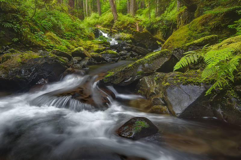 Sol Duc Valley - Olympic N.P