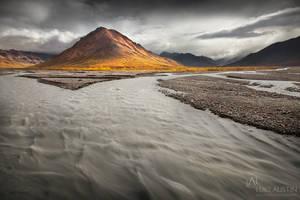 Toklat - Denali N.P Alaska