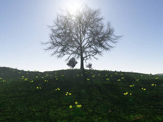 Tree shadows by mr-miley