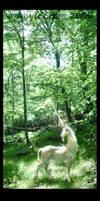 Unicorn in a Glade