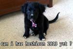 Hoshicon Promo: Tumblr Lulz by raiinbowstars