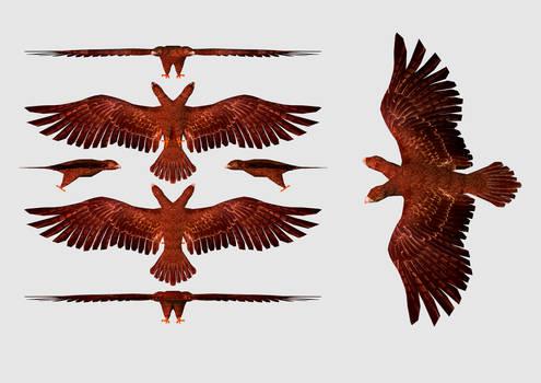 Eagle of Albania 3D