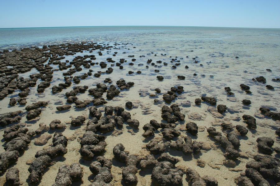 Stromatolites by lunacyfreak