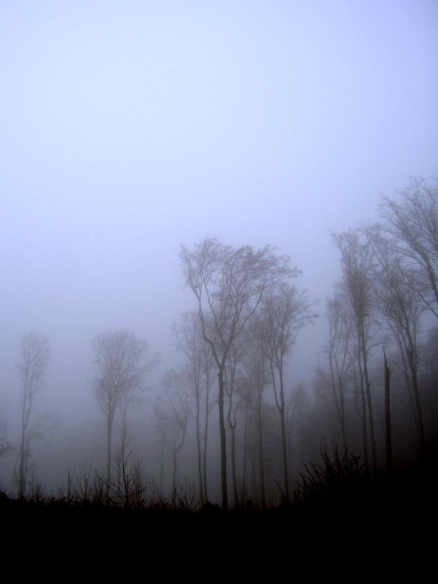Wolkenforst by lunacyfreak