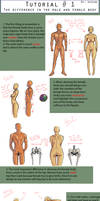 Body Figures Tutorial: Male and Female