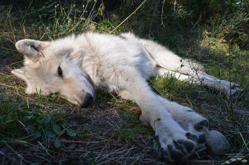 Let Sleeping Wolves Lie by LoneStray