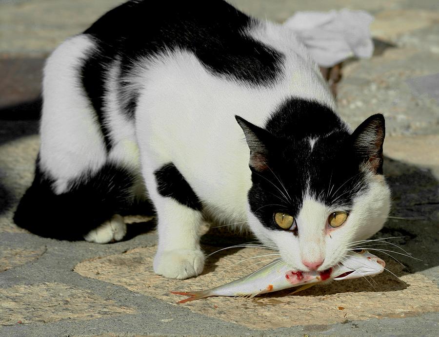 A Cat's Life.... by thrumyeye