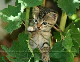 Grapevine Grabber by thrumyeye