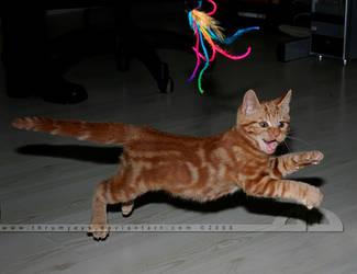 Smiling Kitty by thrumyeye