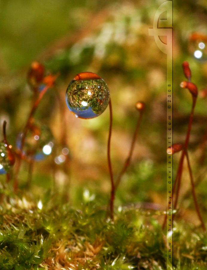 Natural Christmas by thrumyeye
