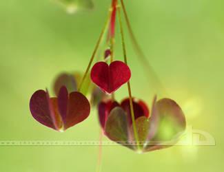 :heart: by thrumyeye