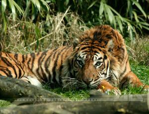 Crouching Tiger, Little Flower