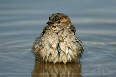Comfortably Wet by thrumyeye