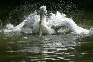 BirdPower by thrumyeye