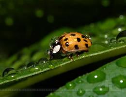 Raindrops.... by thrumyeye