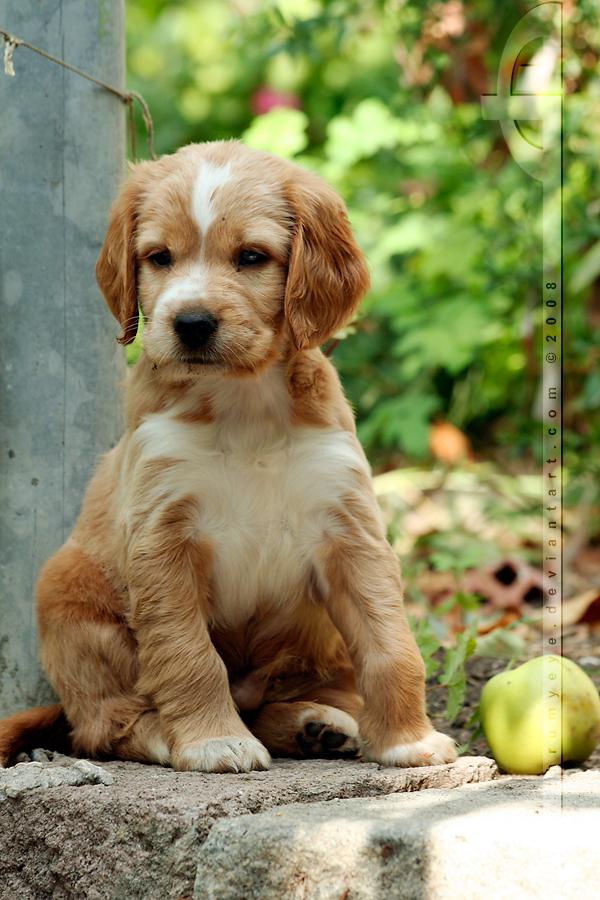 The Doggie and the Apple by thrumyeye