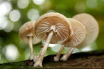FungiParty