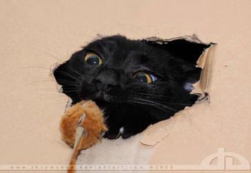 Basement Cat II by thrumyeye