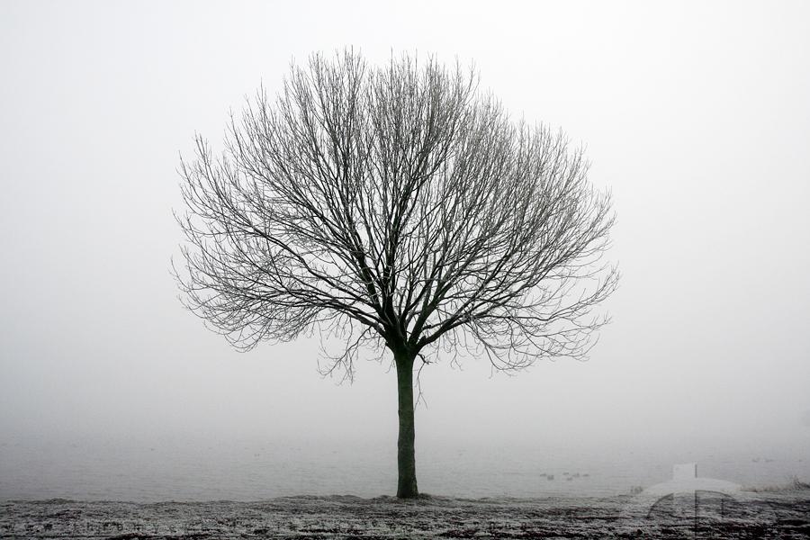 деревья черно белые картинки