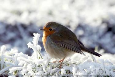 Winter PuffBall by thrumyeye