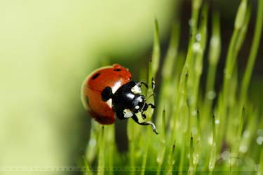 Tiny Creature in a Big World by thrumyeye