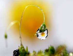 Sunshine in a Drop by thrumyeye