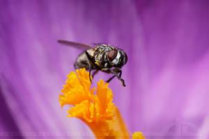 Pretty Fly by thrumyeye