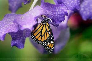 United Colours of Spring by thrumyeye