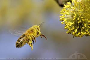 Bee on a Mission by thrumyeye